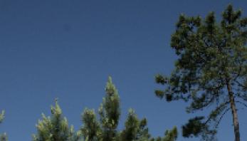 Trabalhos de corte de árvores e limpeza do mato por parte da EDP