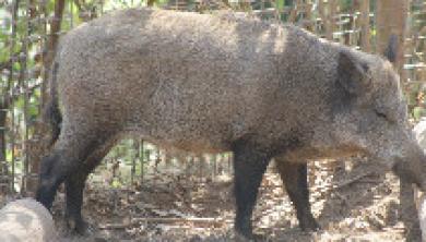 Planos anuais de exploração e condições de candidatura ao exercício de caça